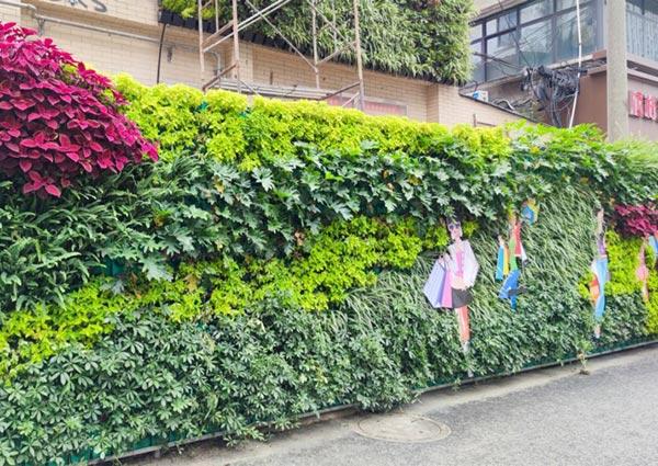 荷花池植物墙